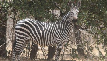 5 Days 4 Nights Selous, Mikumi And Udzungwa Budget Safari