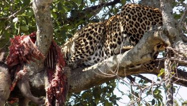 5 Days Adventure Maasai Mara, Lake Nakuru & Lake Naivasha