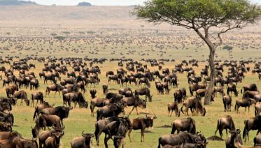 5 Days - Budget Lodging Safari In North Tanzania