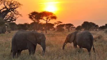 5 Days Budget Safari