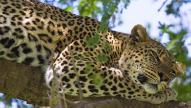 5 Days Safari in Serengeti, Tarangire, and Ngorongoro