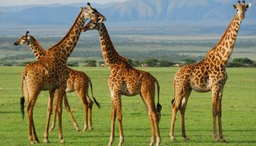 5 Days Safari:Lake Manyara, Serengeti & Ngorongoro Crater