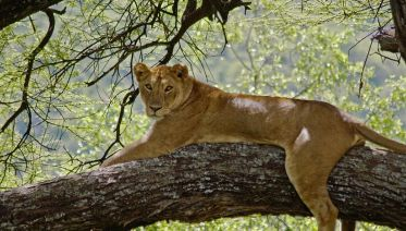 5 Days Safari - Manyara,Ngorongoro And Serengeti