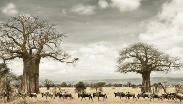 5-days Tarangire-Serengeti-Ngorongoro Safari