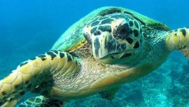 5D/4N Leisure Diving on Tioman Island