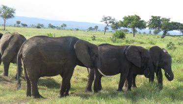 Tarangire National Park Tours