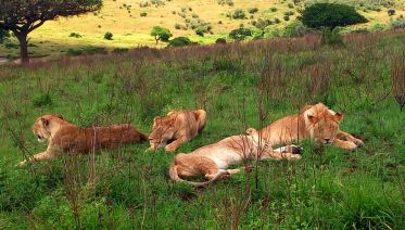 6-Day best of Tanzania budget safari