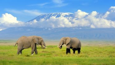 6-Day Fascinating Safari