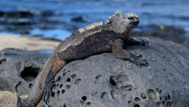 6 Day Galapagos Islands Classic - Group Tour