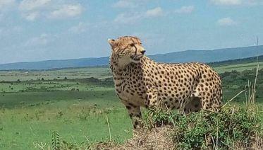 6 Day Masai Mara, Lake Nakuru and Amboseli