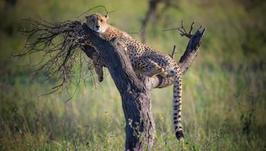 6 Day Safari Extravaganza In Tanzania