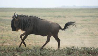 6 Day Safari: Tarangire / Serengeti / Ngorongoro