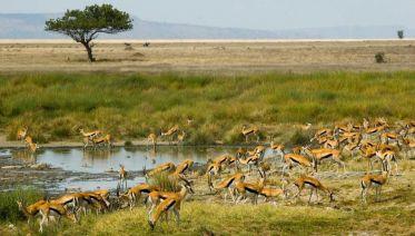 6-Day Tanzania Safari