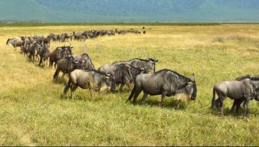 6-Day Tanzania Wildebeest Migration Safari