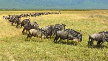 6-Day Tanzania Wildebeest Migration Safari