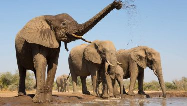 6-day Uganda Wildlife Safari Tour