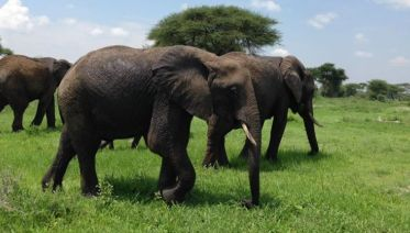 Lake Manyara National Park Tours