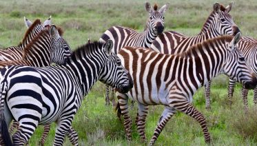 6 Days Bird Watching Safari In Tanzania