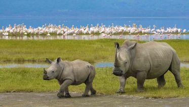 6 Days Express Kenya Safari