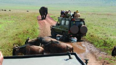 6 Days Safari - Tarangire,Serengeti,Ngorongoro & Manyara
