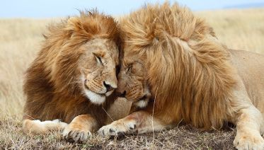 6 Days – Serengeti Migration Group Safari