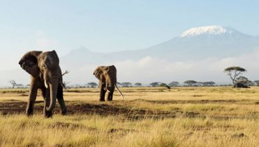 Lake Nakuru National Park Tours