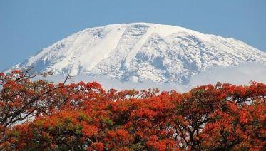7 Day Kilimanjaro Climb - Lemosho Route