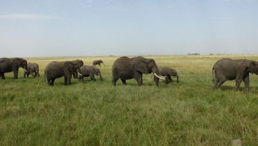 7-Day Magical Encounter Of The Big Five Safari