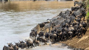 7-Day Migration Safari: Spending A Week In The Wild