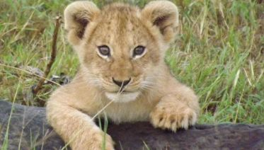 7-Day Safari Adventure in Kenya