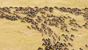 7-day Serengeti Great Migration Safari