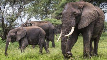 7-Day Tanzania Safari
