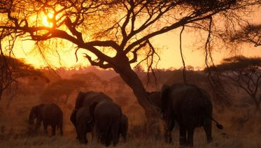 7 Days 6 Nights Tanzania Adventure Safari Camp