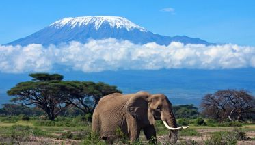 7 Days Machame Route Kilimanjaro Trekking