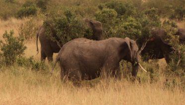 7 Days Masai Mara, Lake Nakuru, Naivasha & Amboseli