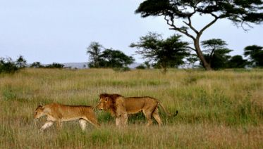 7 Days Serengti, Ngorongo, Tarangire, Manyara & Eyasi