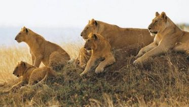8-Day Camping Safari : Best Of Tanzania