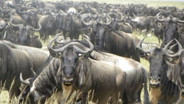 Ngorongoro Conservation Area Tours