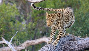 9 Days-Photographic Safaris