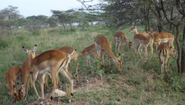 9-Days Ultimate Tanzania North Circuit Safari