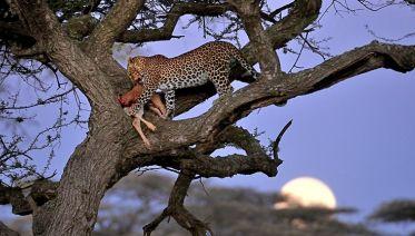 A Classic 6 Day Safari of Tanzania Wildlife and Nature
