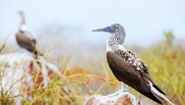 A Taste Of Galapagos - Nemo II (Itinerary A)