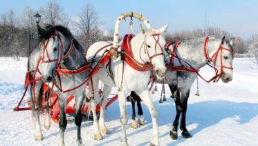 A Tsar's Gold Winter's Tale