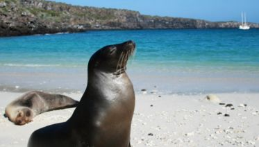 Best Of Galapagos
