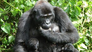 Active Holiday Package And Uganda Wildlife