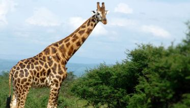 Active Holiday Package And Uganda Wildlife