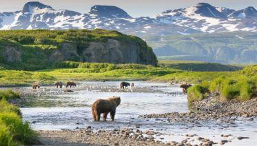 Alaskan Wildlife & Wilderness - Hotel Departure