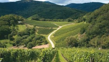 Alsace Mountains & Vineyards