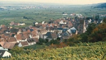 Alsace Vineyard Trails
