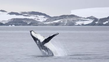 Antarctic Explorer - Marine Mammals